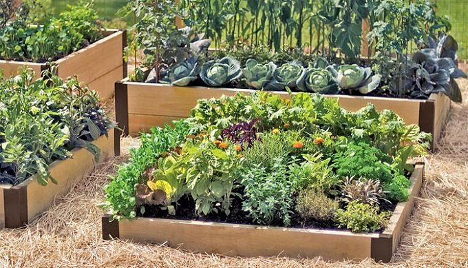 Merveilleux Considerations For Planting Trees In Raised Beds