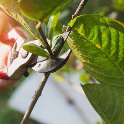 How to Get Rid of Spider Mites During Flowering - Plant Guide